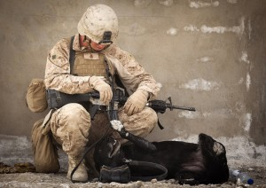 upon-retirement-though-their-handlers-are-given-the-option-to-adopt-or-the-service-will-help-the-dogs-find-willing-families