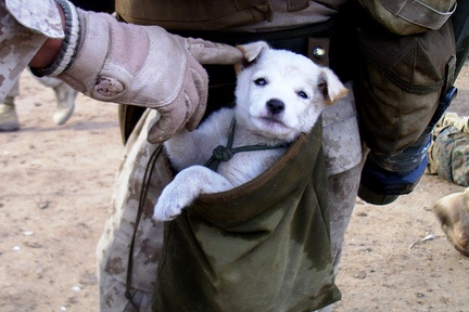 military_dog_drop-pouch