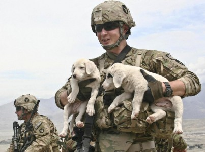 U.S. Army Spc. Ahren Blake, a combat medic from Clinton, Iowa, with Company D, 1st Battalion, 133rd Infantry Regiment, Task Force Ironman, a part of the 2nd Brigade Combat Team, 34th Infantry Division, Task Force Red Bulls, holds two puppies he found at an observation post in the Aziz Khan Kats Mountain Valley range near Jalalabad, Afghanistan, April 15. The puppies have been living with the Afghan National Army Weapons Company, 2nd Battalion, 201st Infantry Corps, which man the Ops that 3rd Platoon visited.